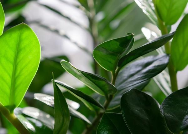 ogrod-plus-rosliny